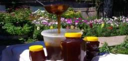 янтарный мёд