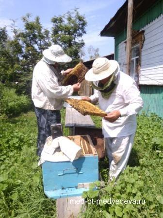 Почему наш алтайский мёд неповторим?