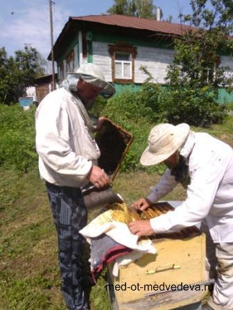 Продажа меда Алтайского края