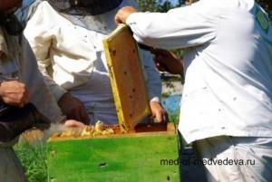 лечебные свойства заключаются в мёде