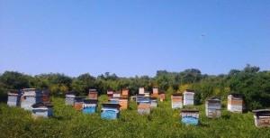 пасека от Медведевых, себестоимость производства мёда учитываем на ней